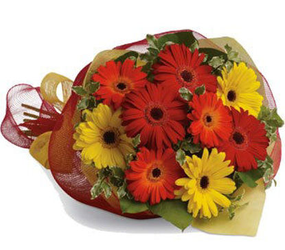 Picture of Gerbera Brights