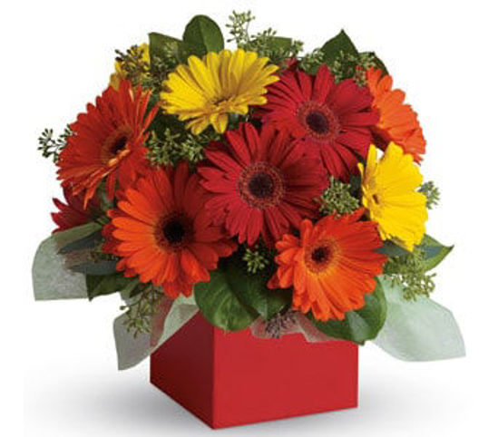 Picture of Glorious Gerberas