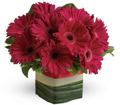 Picture of Grand Gerberas