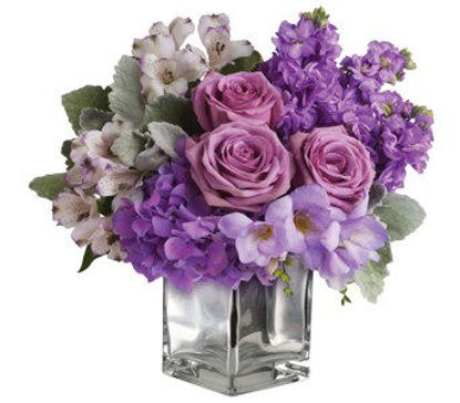 Picture of Lavender Mum