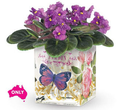 Picture of Enchanted Violet